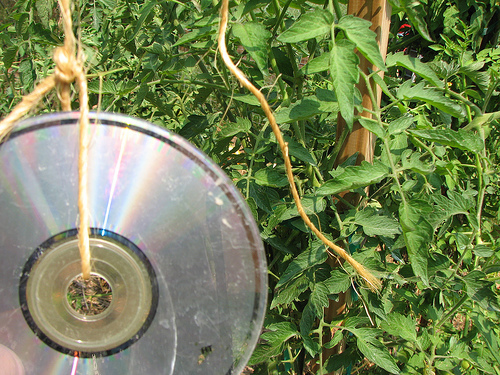 How To Use Your Old CDs